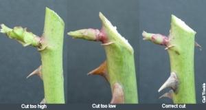 pruningcuts