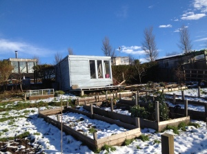 A snowy allotment site