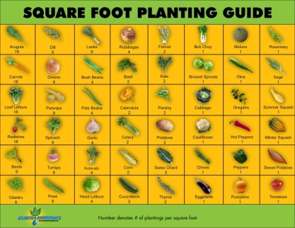 Square-Foot-Planting-Guide
