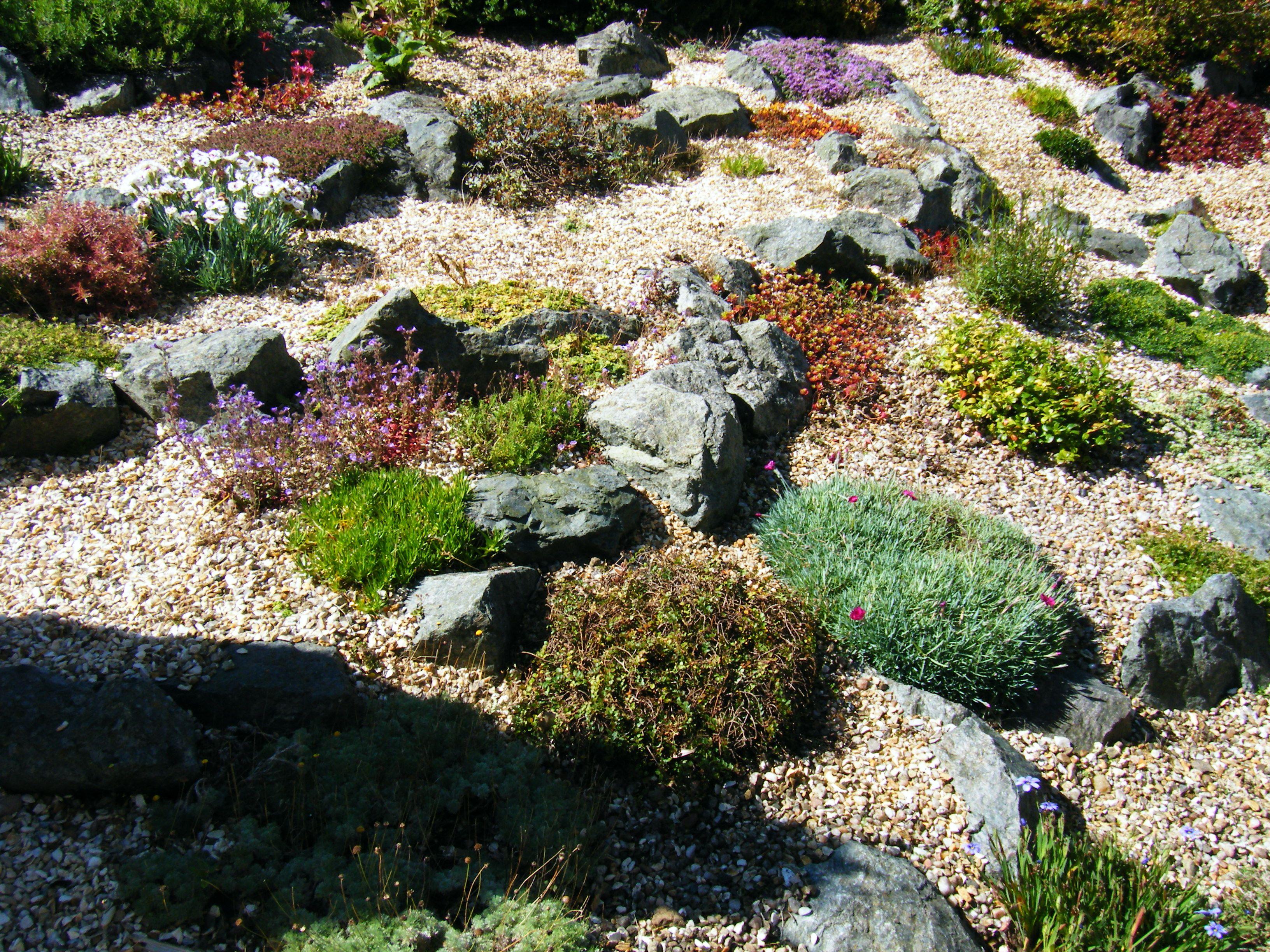 Transforming A Bluebell Zone Into A Rock Garden The
