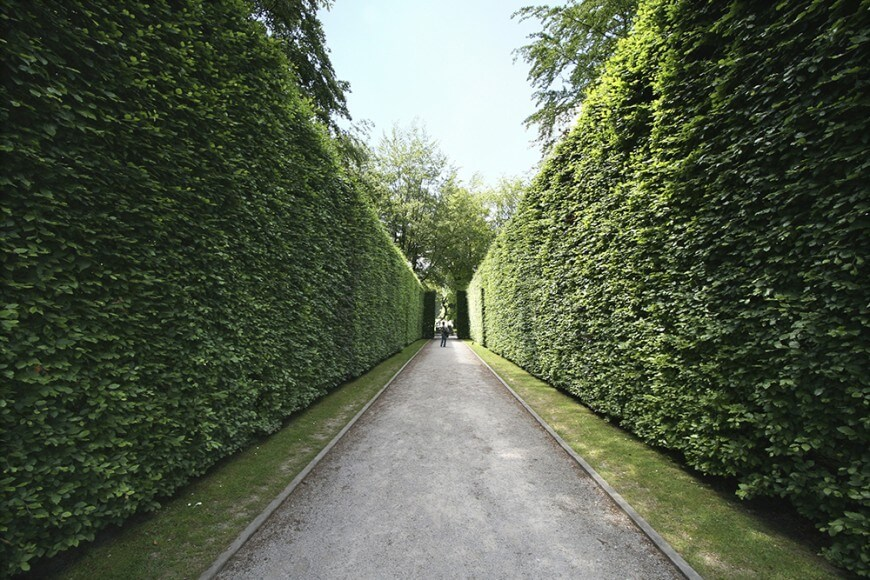 How To Plant A Hedge Advice From Hopes Groves Nurseries